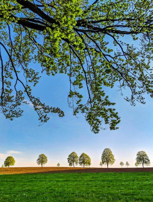 """Bäume an der Landstraße 338 kurz vor dem Drabenderhöher Ortseingang. Foto: <a href=""""http://www.melzer.de"""">Günther Melzer</a>"""
