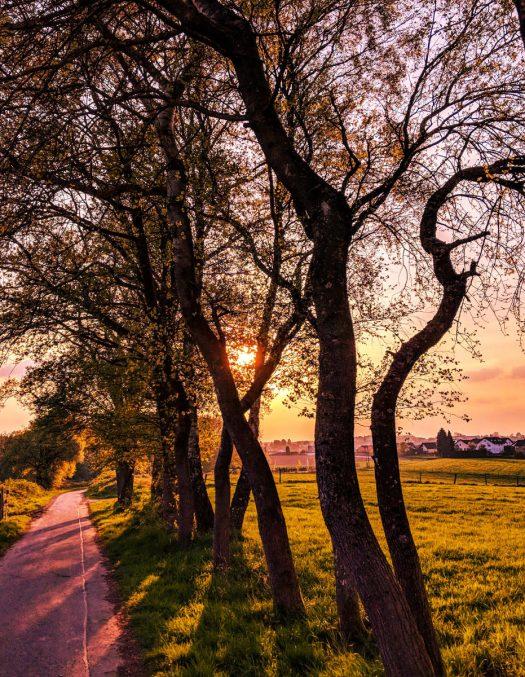 """Biegt man in die Straße """"Zum Jagdhaus"""" ein und geht dann weiter Richtung Wald, kommt man auf den oft """"Sibi-Allee"""" oder """"Sibi-Promenade"""" genannten Weg. Viele nennen den Weg, wo dieses Foto am 23. April um 19:40 Uhr entstanden ist, auch Jägerweg oder Römerweg. Foto: <a href=""""http://www.melzer.de"""">Günther Melzer</a>"""